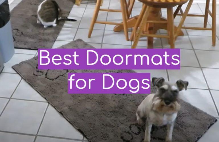 5 Best Doormats for Dogs
